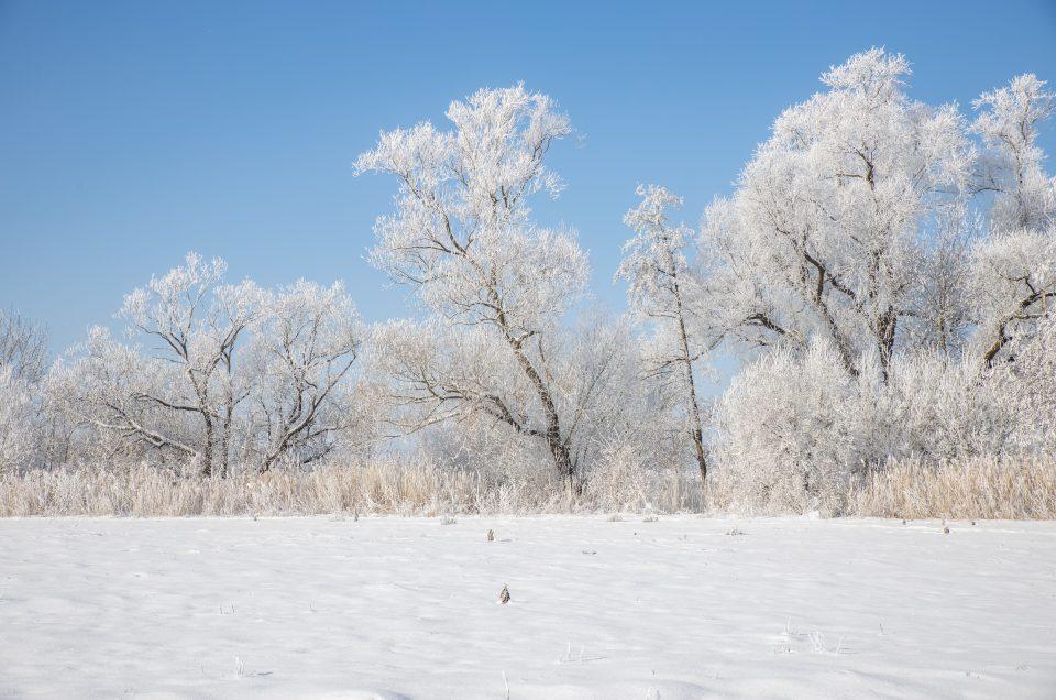 Winter, Bäume, Frost, Februar, Raureif, Nebel, Göttingen, Leine, Kälte