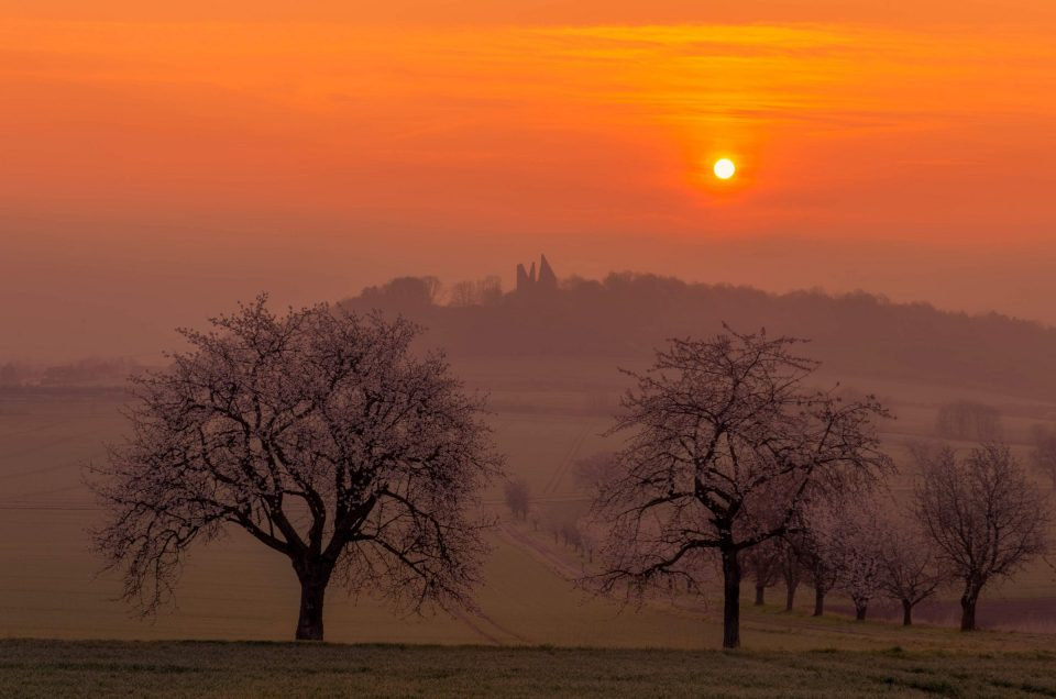 Blühende Kirschbäume bei Sonnenaufgang nahe Friedland bei Marzhausen